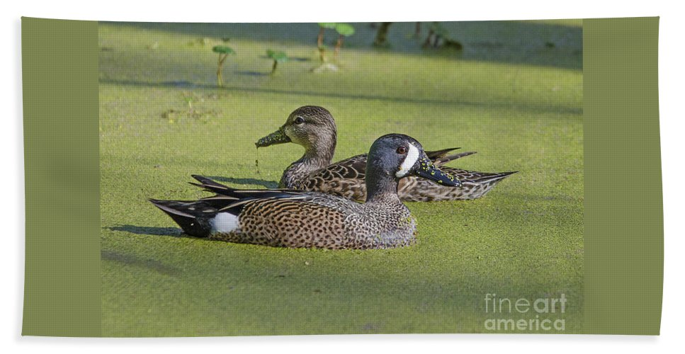 Beach Towel featuring the photograph Two Ducks Passing By by TJ Baccari