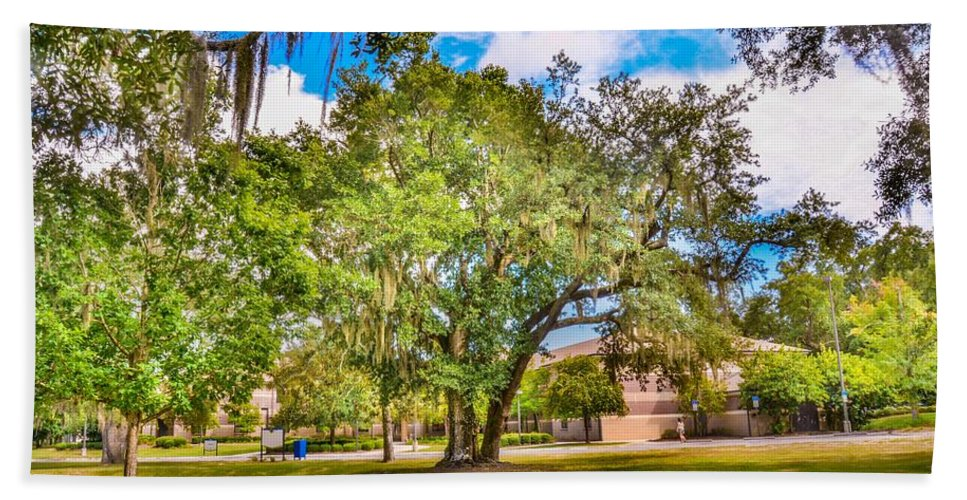 Hdr Beach Towel featuring the photograph University Tree by Jon Cody
