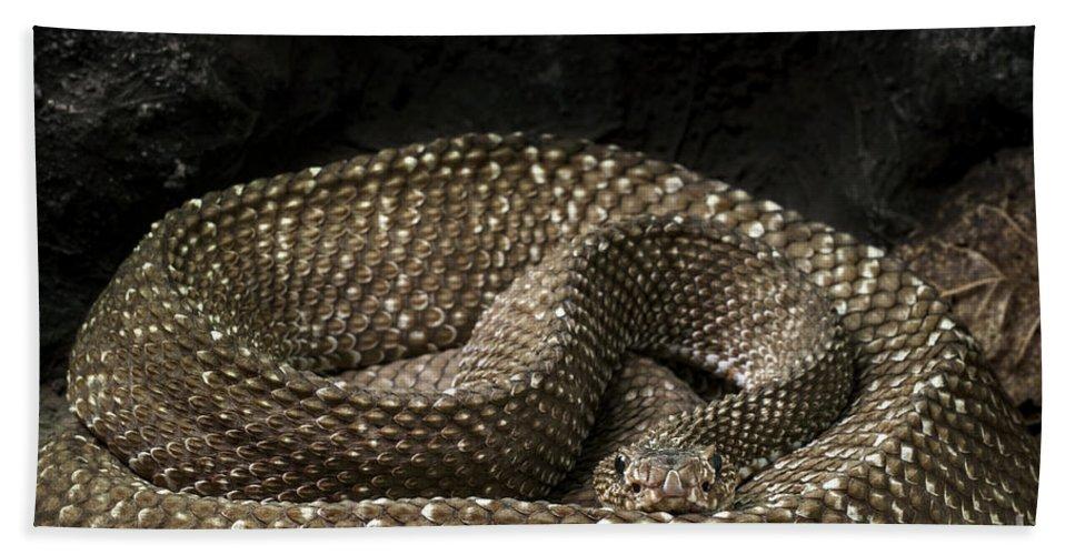 Uracoan Rattlesnake Beach Towel featuring the photograph Uracoan Rattlesnake by Arterra Picture Library