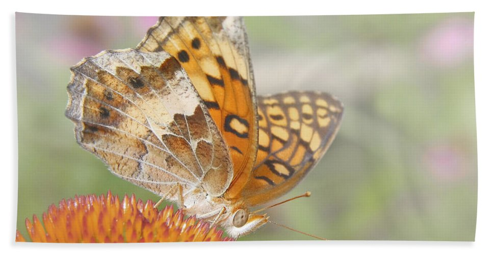 Antennae Beach Towel featuring the photograph Variegated Fritillary On Cone Flower by David and Carol Kelly