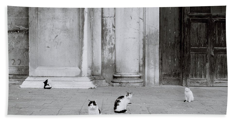 Cat Beach Towel featuring the photograph Cats Of Venice by Shaun Higson