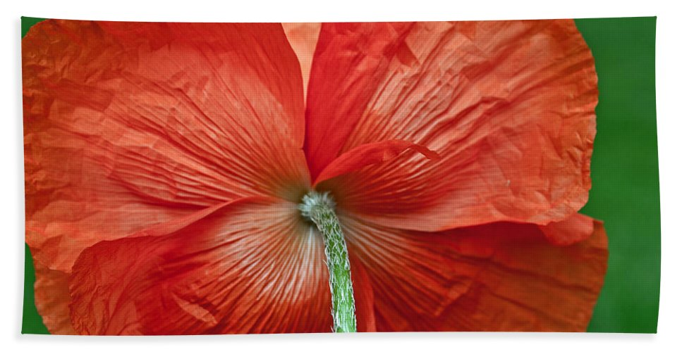 Poppy Beach Towel featuring the photograph Veterans Day Remembrance by Tikvah's Hope