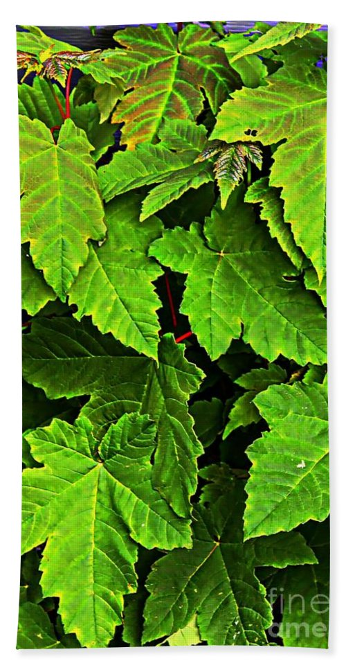 Vibrant Young Maples Beach Towel featuring the photograph Vibrant Young Maples - Acer by Barbara Griffin