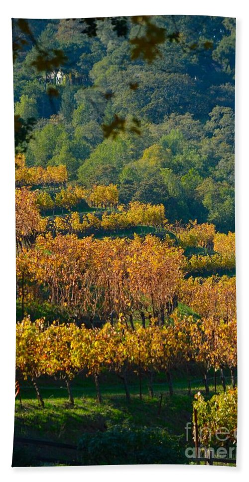 Benzinger Winery Beach Towel featuring the photograph Vineyard Fall by Beth Sanders