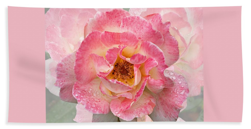 Roses Beach Towel featuring the photograph Vintage Rose Square by Gill Billington