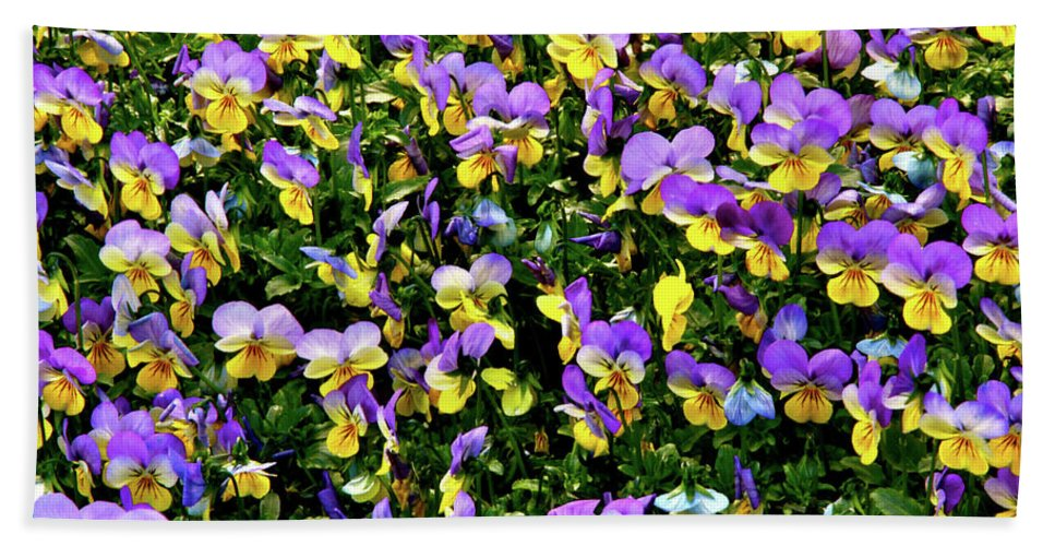 Flowers Beach Towel featuring the photograph Viola's Fantasy by Ed Riche