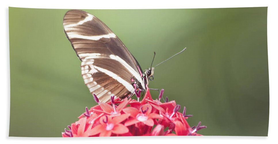Butterfly Beach Towel featuring the photograph Visitor In The Garden by Kim Hojnacki
