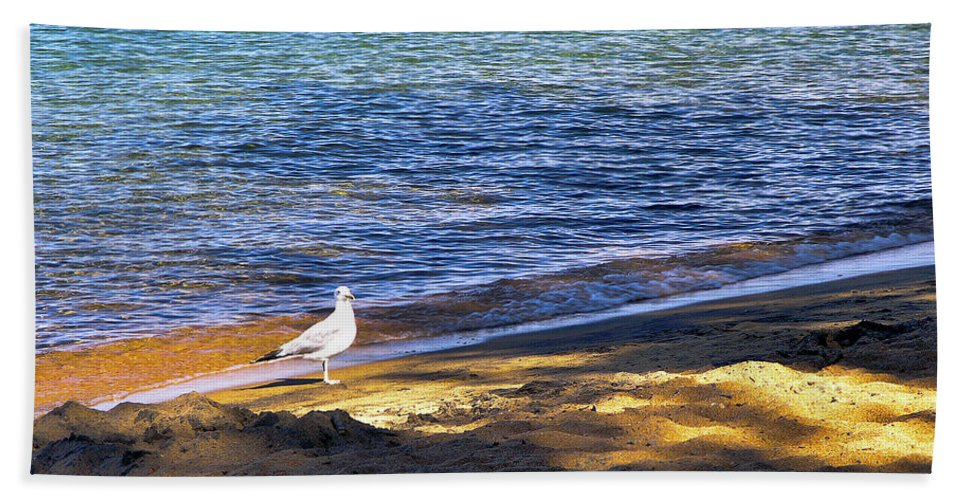 Seagull Beach Towel featuring the photograph Visitor - Lake Tahoe by John Waclo