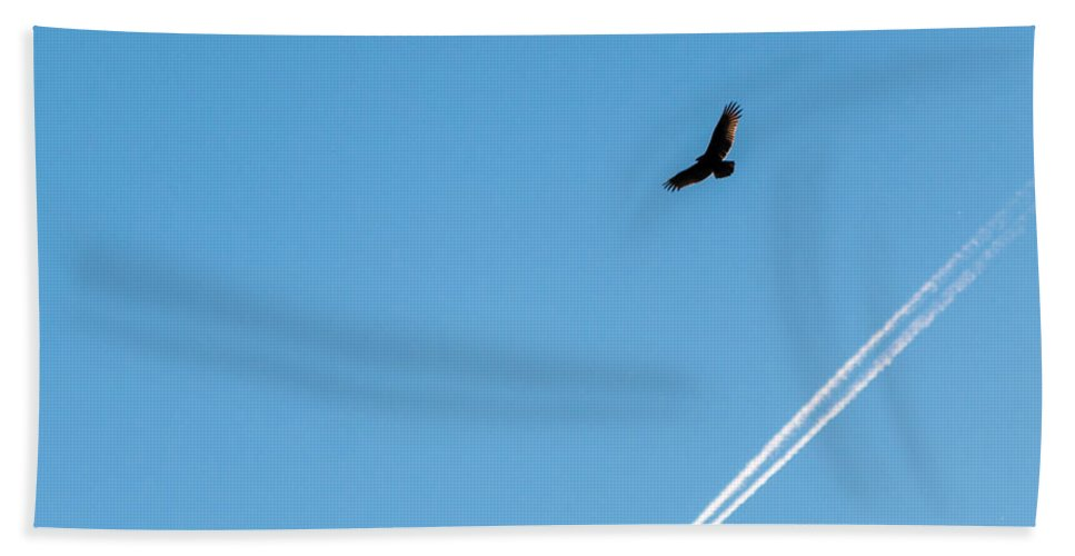 Above Beach Towel featuring the photograph Vulture Underlined by Gaurav Singh