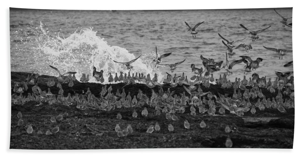 Wading Birds Beach Towel featuring the photograph Wading Birds-black And White V2 by Douglas Barnard