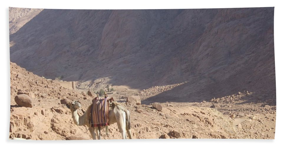Mt Sinai Beach Towel featuring the photograph Waiting For A Rider by Katerina Naumenko