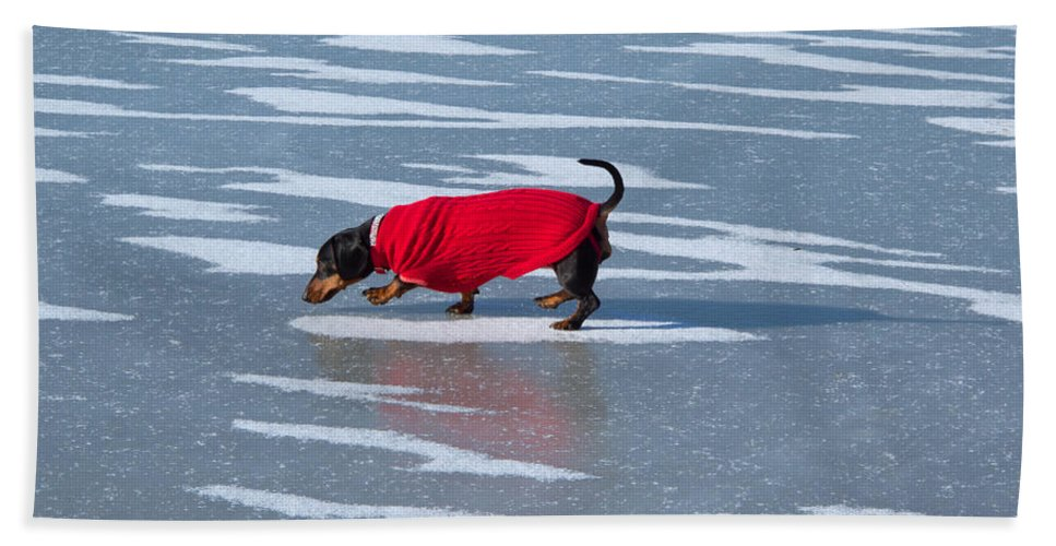 Dachshund Beach Towel featuring the photograph Walking On Water by Ann Horn
