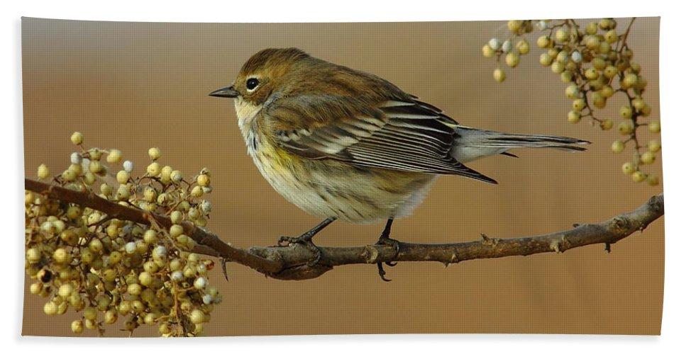 Animal Beach Towel featuring the photograph Yellow Rumped Warbler by Robert Frederick