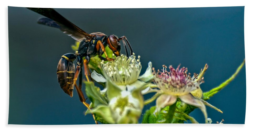 Wasps Beach Towel featuring the photograph Wasp by Bob Orsillo