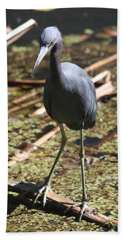 Heron Beach Towel featuring the photograph Watchful Little Blue Heron by Christiane Schulze Art And Photography