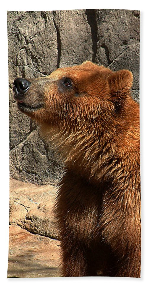 Bear Beach Towel featuring the photograph Watching The Sun Set by RC DeWinter
