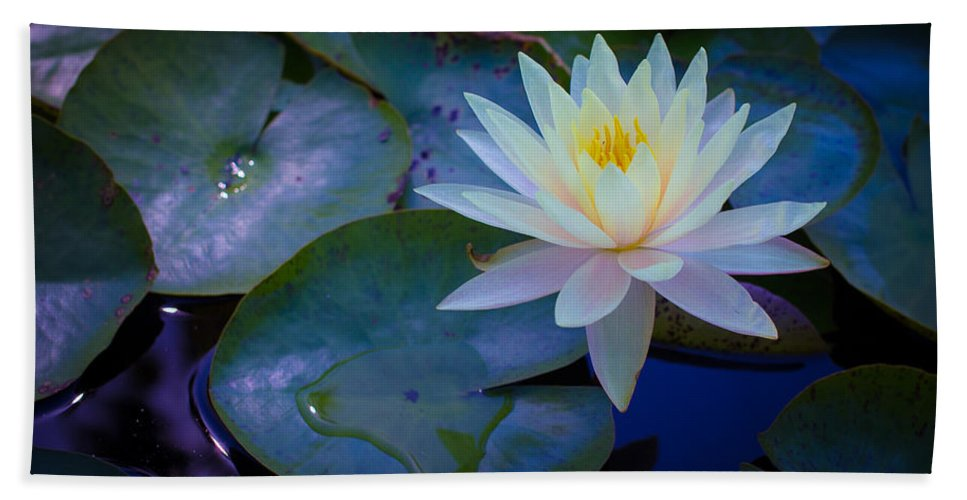 Water Lily Beach Towel featuring the photograph Water Lily by Richard Cheski