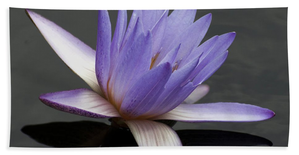 Summer Beach Towel featuring the photograph Water Lily Teri Dunn by Terri Winkler