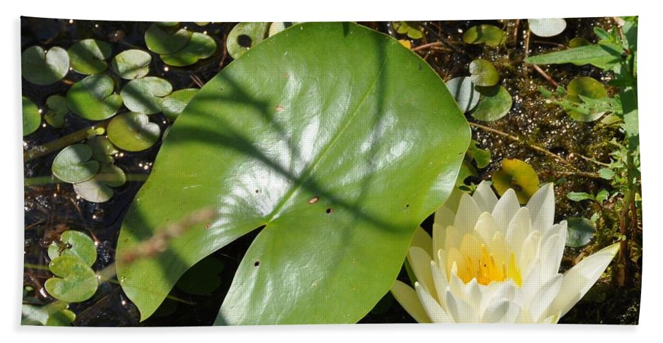 Water Lily Beach Towel featuring the photograph Water Lily by Valerie Kirkwood