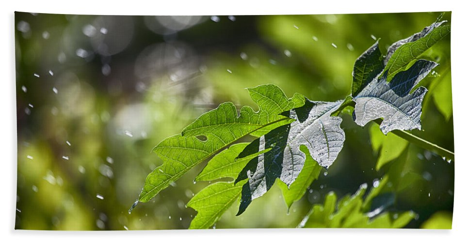 Water Beach Towel featuring the photograph Water-the Essence Of Life V3 by Douglas Barnard