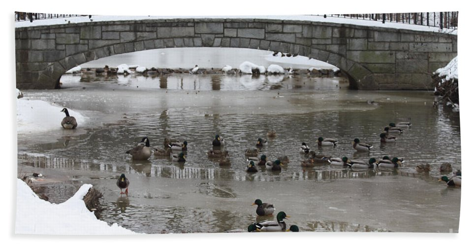 Watering Hole Ducks Only Beach Towel featuring the photograph Watering Hole Ducks Only by John Telfer