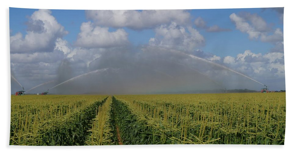 Corn Beach Towel featuring the photograph Watering The Corn by John Wall