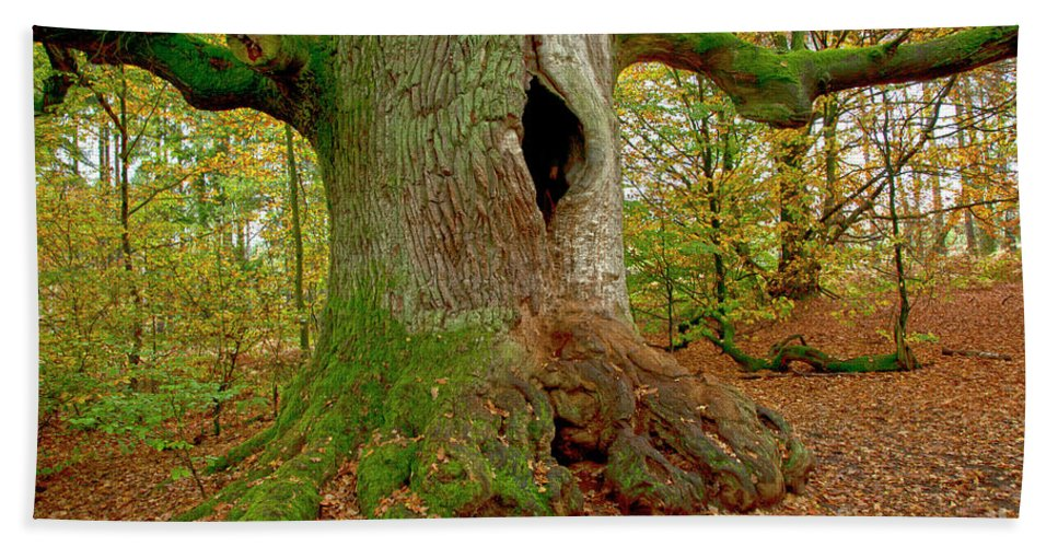 Tree Beach Towel featuring the photograph We Are Here Since 1000 Years 2 by Heiko Koehrer-Wagner