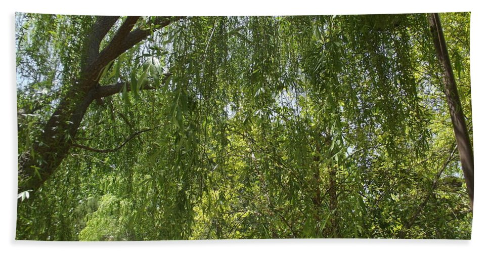 Weeping Willow Beach Towel featuring the photograph Weeping Willow by Jennifer Lavigne