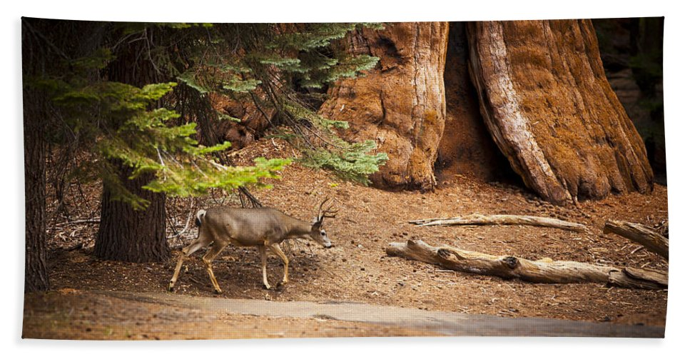 Deer Beach Towel featuring the photograph Welcome Home - Sequoia National Forest by Angela Stanton