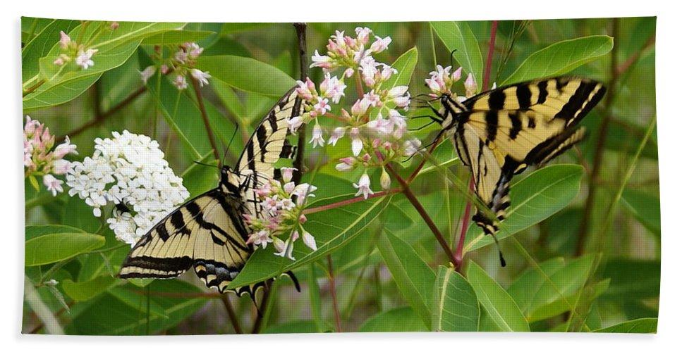 Spokane Beach Towel featuring the photograph Western Tiger Swallowtail Butterflies by Ben Upham III