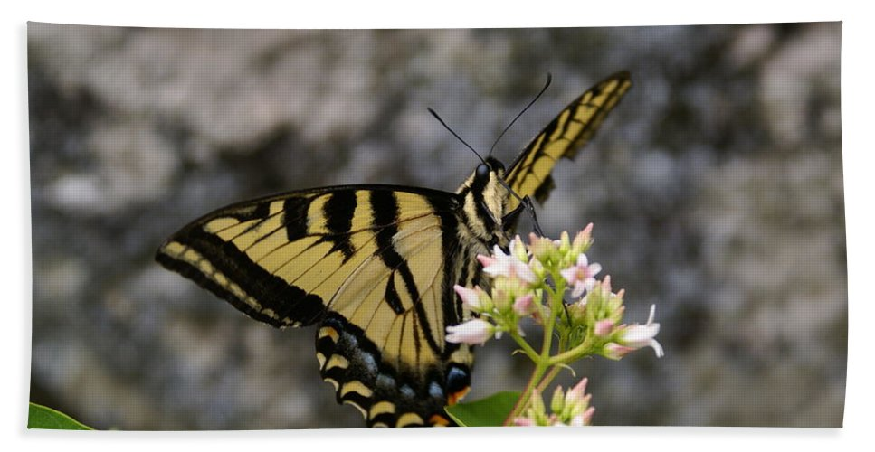 Spokane Beach Towel featuring the photograph Western Tiger Swallowtail Butterfly 2 by Ben Upham III