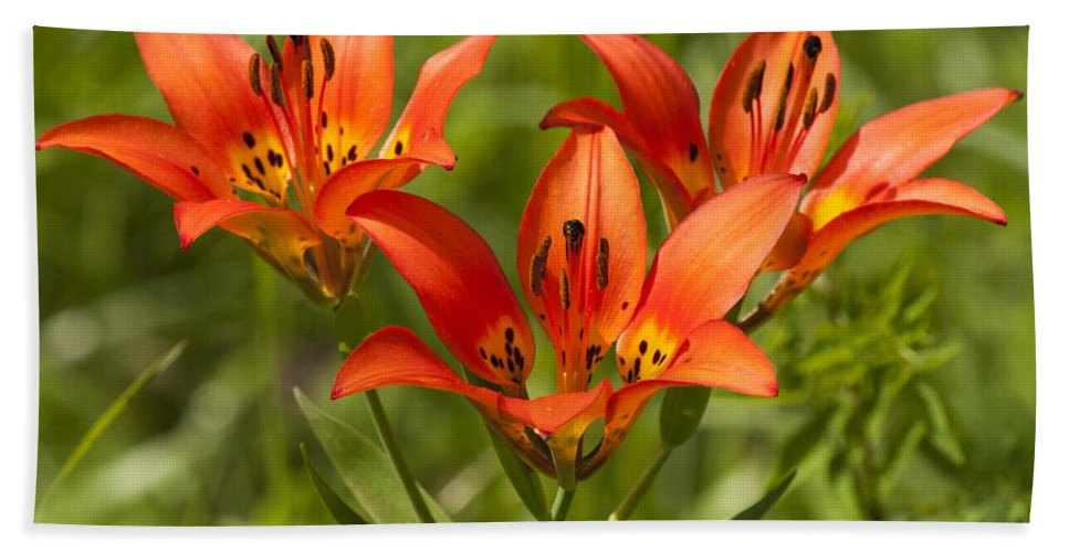 Western Wood Lily Beach Towel featuring the photograph Western Wood Lily by Vivian Christopher