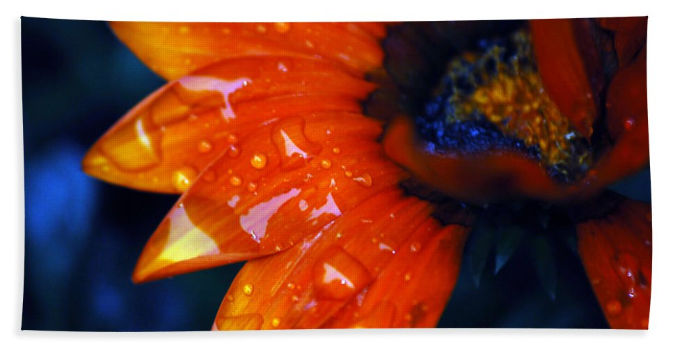 Daisy Beach Towel featuring the photograph Wet Petals by Lori Tambakis
