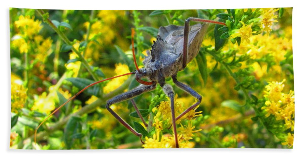 Assasin Bug Wheel Bug Natural Science Preservation Meadow Habitat Conservation Rare North American Insects Predatory Insects Insect Nightmare True Bug Forest Creatures Meadow Creatures Maryland Insects Spike Backed Insect Stinging And Biting Insects Valuable Ecological Resource Naturalist Nature Photography Wildlife Habitat Lifeform Alive Living Being All Creatures Great And Small Macro Photography Images Razor Backed Insects Beach Towel featuring the photograph Wheel Bug by Joshua Bales