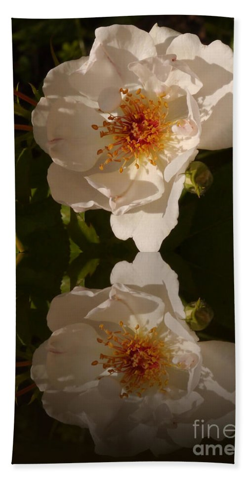Briar Rose Beach Towel featuring the photograph White Briar Rose Reflection by Christiane Schulze Art And Photography