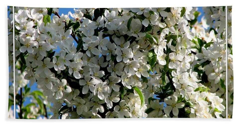White Flowering Crabapple Tree Beach Towel For Sale By Rose Santuci