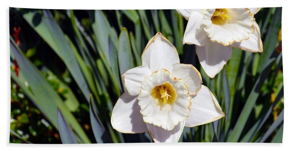 Flower Beach Towel featuring the photograph White Flowers by Brent Dolliver