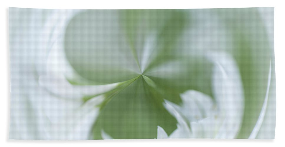 Alliaceae Beach Towel featuring the photograph White Green And Round by Anne Gilbert