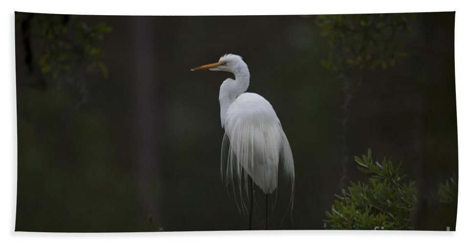 White Heron Beach Towel featuring the photograph Heron Feathers In A Ruffle by Dale Powell