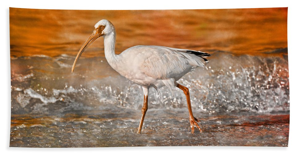 White Beach Towel featuring the photograph White Ibis Stroll by Betsy Knapp