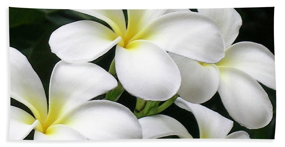 Hawaii Iphone Cases Beach Sheet featuring the photograph White Plumeria by James Temple