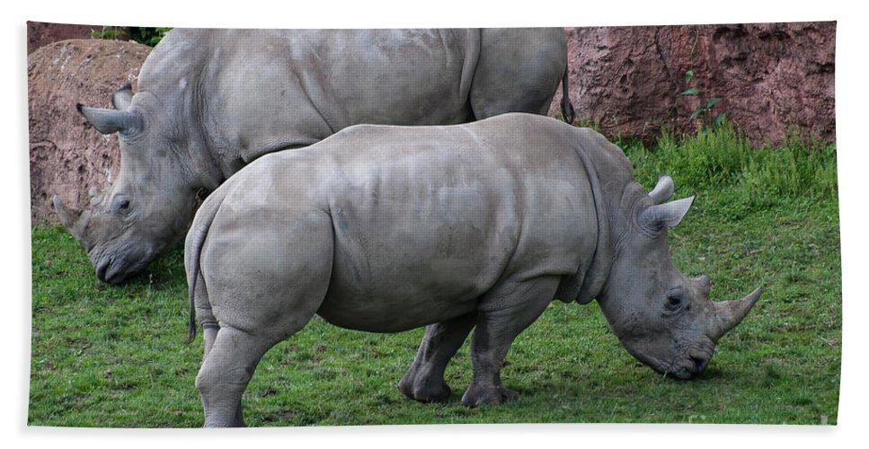 White Rhinoceros Beach Towel featuring the photograph White Rhinoceros by Bianca Nadeau