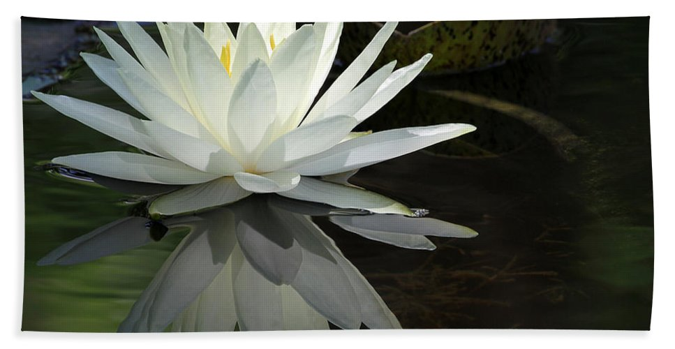 Amazing Beach Towel featuring the photograph White Water Lily Reflections by Sabrina L Ryan