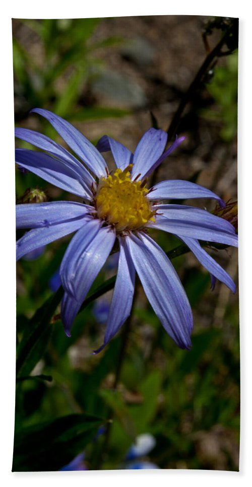 Flower Beach Towel featuring the photograph Wild Aster Flower by Tikvah's Hope