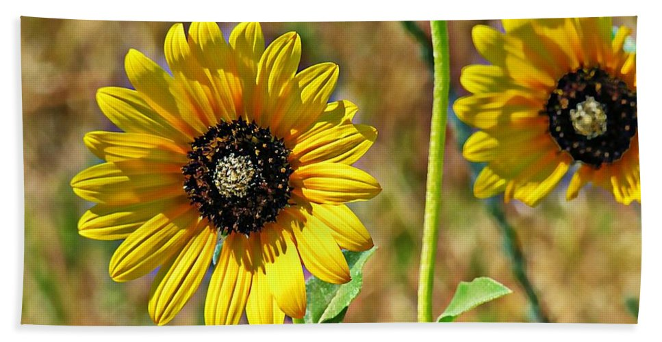 Sunflowers Beach Towel featuring the photograph Wild One by Adam Vance