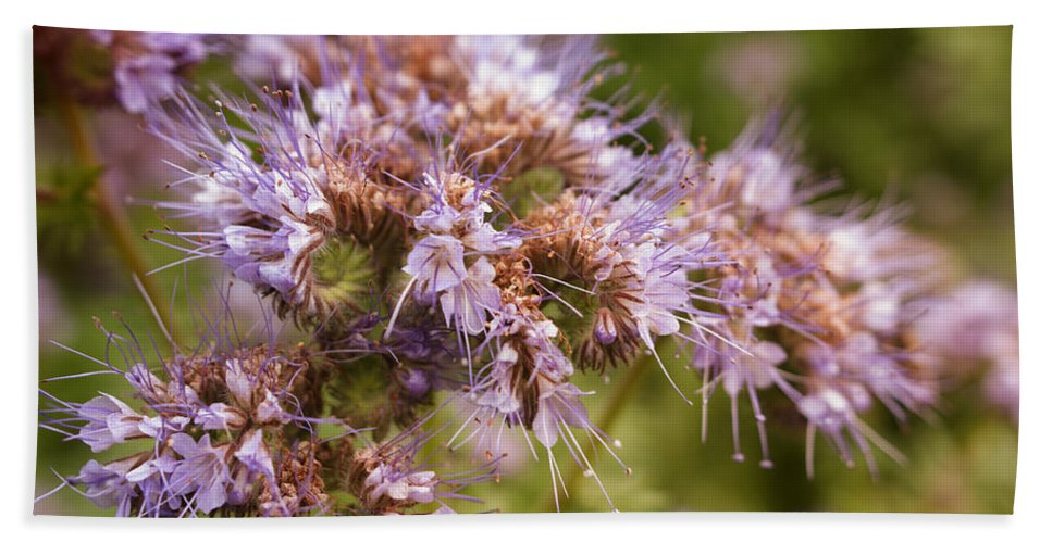 Flowers Beach Towel featuring the photograph Wild Violet by Miguel Winterpacht