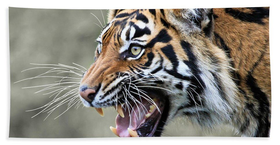 Tiger Beach Towel featuring the photograph Wildcat II by Athena Mckinzie