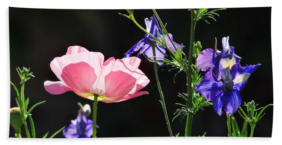 Flower Beach Towel featuring the photograph Wildflowers On Black by Lynn Bauer