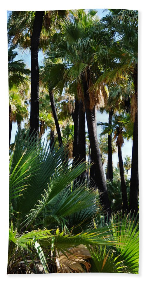 Willis Beach Towel featuring the photograph Willis Palm Oasis by Kyle Hanson