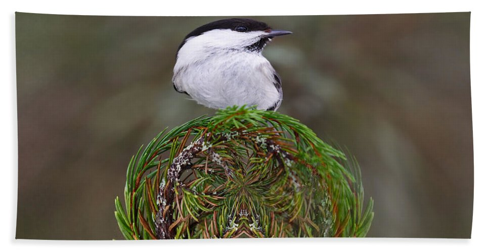 Finland Beach Towel featuring the photograph Willow Tits Planet by Jouko Lehto